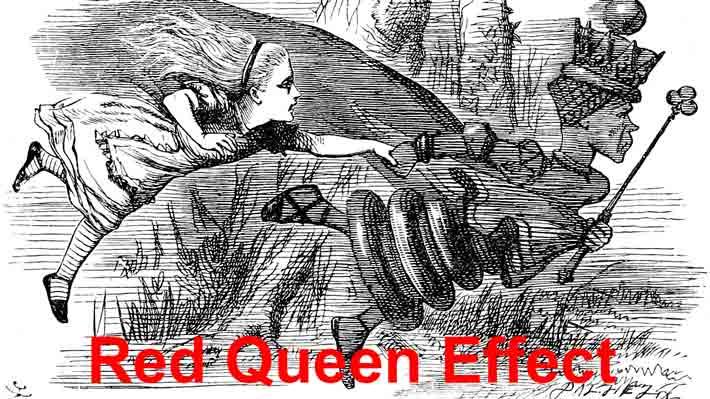 151 Red Queen Effect 1 1